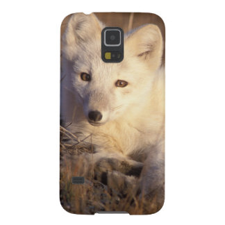 arctic fox, Alopex lagopus, coat changing from 2 Case For Galaxy S5