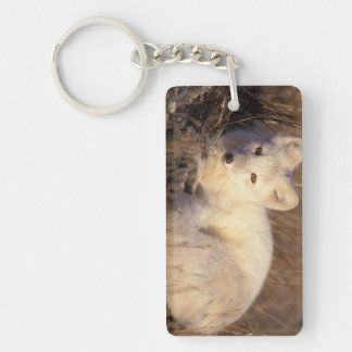 arctic fox, Alopex lagopus, coat changing from 2 Double-Sided Rectangular Acrylic Key Ring