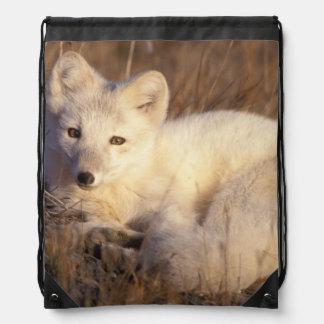 arctic fox, Alopex lagopus, coat changing from 2 Drawstring Bag
