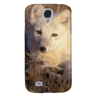 arctic fox, Alopex lagopus, coat changing from 2 Galaxy S4 Case