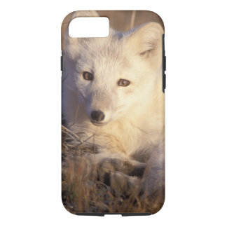 arctic fox, Alopex lagopus, coat changing from 2 iPhone 8/7 Case