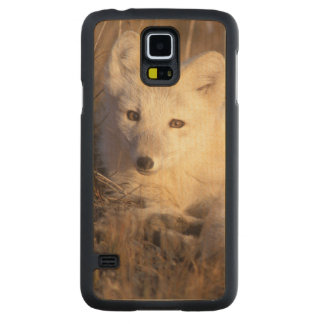 arctic fox, Alopex lagopus, coat changing from 2 Maple Galaxy S5 Case