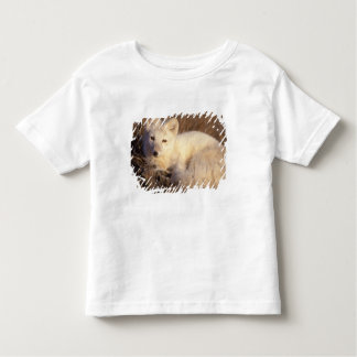 arctic fox, Alopex lagopus, coat changing from 2 Toddler T-Shirt