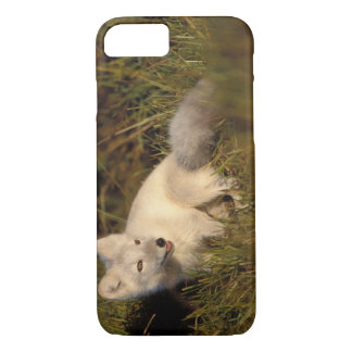 arctic fox, Alopex lagopus, coat changing from 3 iPhone 8/7 Case