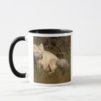 arctic fox, Alopex lagopus, coat changing from 3 Mug