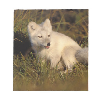arctic fox, Alopex lagopus, coat changing from 3 Notepad