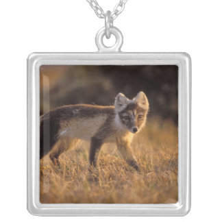 arctic fox, Alopex lagopus, coat changing from Silver Plated Necklace