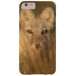 arctic fox, Alopex lagopus, on the 1002 coastal 2 Barely There iPhone 6 Plus Case