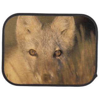 arctic fox, Alopex lagopus, on the 1002 coastal 2 Car Mat