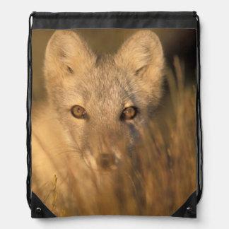 arctic fox, Alopex lagopus, on the 1002 coastal 2 Drawstring Bag