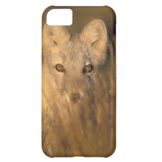 arctic fox, Alopex lagopus, on the 1002 coastal 2 iPhone 5C Case