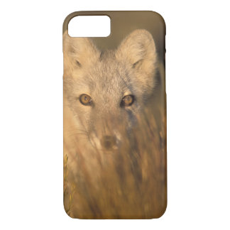 arctic fox, Alopex lagopus, on the 1002 coastal 2 iPhone 8/7 Case