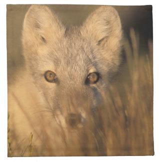 arctic fox, Alopex lagopus, on the 1002 coastal 2 Napkin