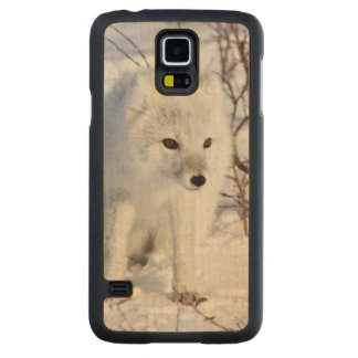 Arctic Fox , Churchill Wildlife Management Area Carved Maple Galaxy S5 Case