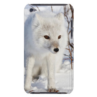 Arctic Fox , Churchill Wildlife Management Area Case-Mate iPod Touch Case