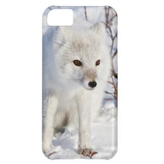 Arctic Fox , Churchill Wildlife Management Area iPhone 5C Case