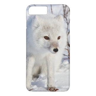 Arctic Fox , Churchill Wildlife Management Area iPhone 8 Plus/7 Plus Case