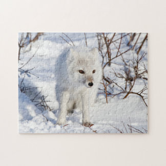 Arctic Fox , Churchill Wildlife Management Area Jigsaw Puzzle