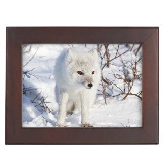Arctic Fox , Churchill Wildlife Management Area Keepsake Box