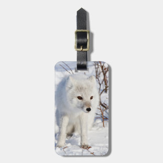 Arctic Fox , Churchill Wildlife Management Area Luggage Tag
