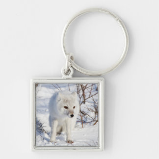 Arctic Fox , Churchill Wildlife Management Area Silver-Colored Square Key Ring