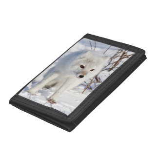 Arctic Fox , Churchill Wildlife Management Area Trifold Wallet