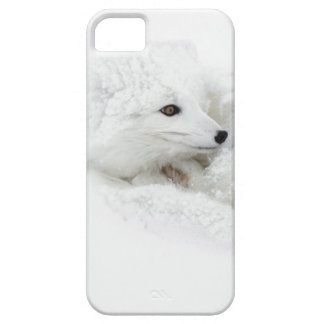 Arctic Fox curled up in winter Case For The iPhone 5