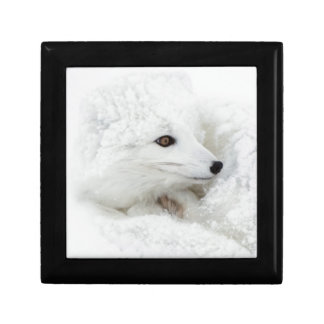 Arctic Fox curled up in winter Gift Box