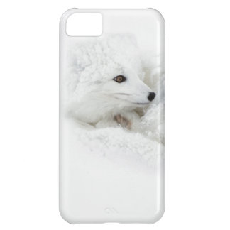 Arctic Fox curled up in winter iPhone 5C Case