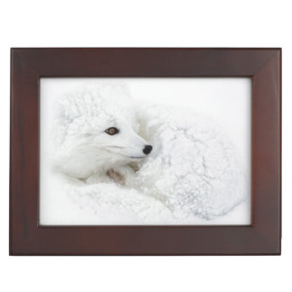 Arctic Fox curled up in winter Keepsake Box