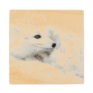 Arctic Fox curled up in winter Maple Wood Coaster