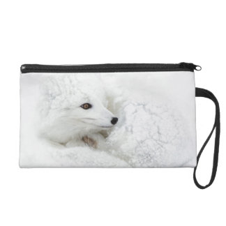 Arctic Fox curled up in winter Wristlet