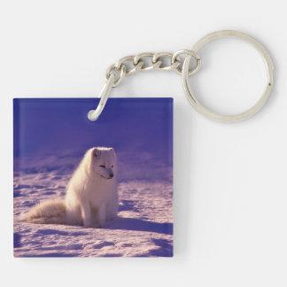 Arctic Fox Double-Sided Square Acrylic Key Ring