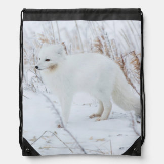 Arctic Fox Drawstring Backpack