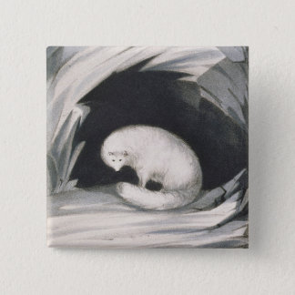 Arctic Fox, from 'Narrative of a Second Voyage in 15 Cm Square Badge