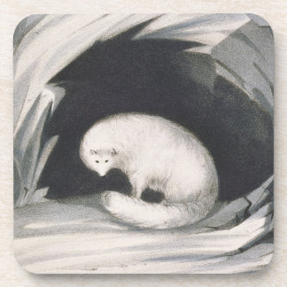 Arctic Fox, from 'Narrative of a Second Voyage in Beverage Coaster