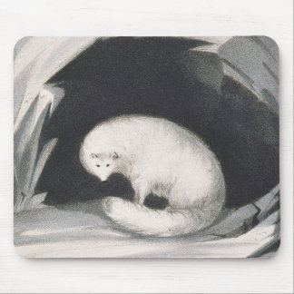 Arctic Fox, from 'Narrative of a Second Voyage in Mouse Mat