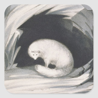 Arctic Fox, from 'Narrative of a Second Voyage in Square Sticker