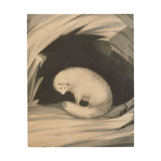 Arctic Fox, from 'Narrative of a Second Voyage in Wood Print