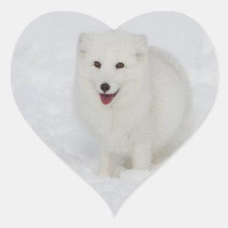 Arctic Fox Heart Sticker
