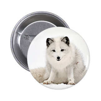 Arctic Fox in the Snow 6 Cm Round Badge