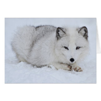 Arctic Fox in the Snow Card