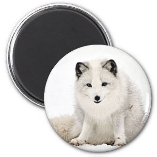 Arctic Fox in the Snow Magnet