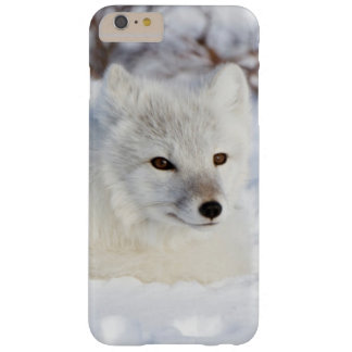Arctic Fox in winter Barely There iPhone 6 Plus Case