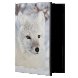 Arctic Fox in winter Case For iPad Air