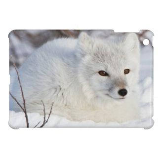 Arctic Fox in winter Case For The iPad Mini