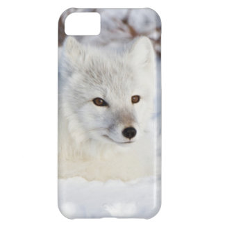 Arctic Fox in winter iPhone 5C Case