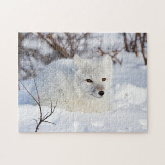 Arctic Fox in winter Jigsaw Puzzle