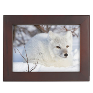 Arctic Fox in winter Keepsake Box