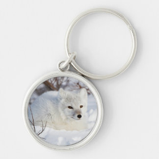 Arctic Fox in winter Silver-Colored Round Key Ring